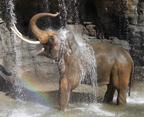 Elephants of Asia