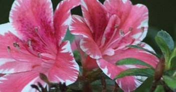 sd-botanic-garden-featured