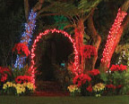 SD-Botanic-Garden-of-lights