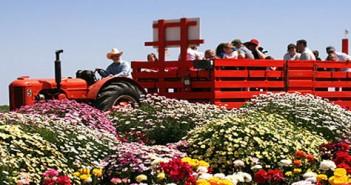 Flower-Fields-featured