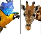 Zoo-Play-Days