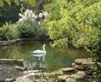 hotel-bel-air-swan-lake
