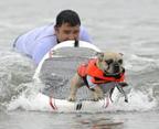 incredible-dog-challenge