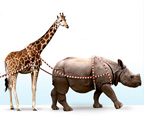 jungle-bells-san-diego-zoo