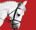 the-horse-natural-history