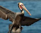San-Diego-Bird-Festival