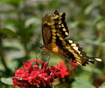 butterfly pavilion natural history museum los angeles