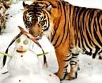 la zoo snow days