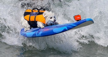 dog-surf-feature