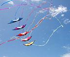 ob-kites