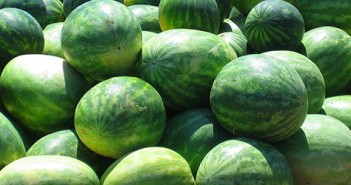 watermelons-banner
