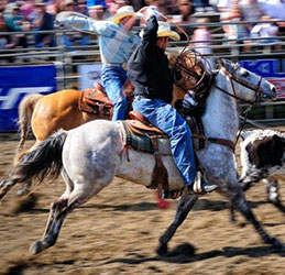 lakeside-rodeo-roping-645x340