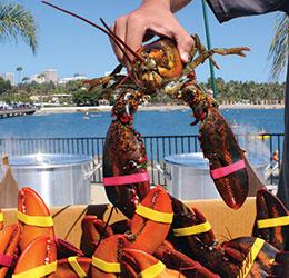 Lobster_Hand_HR