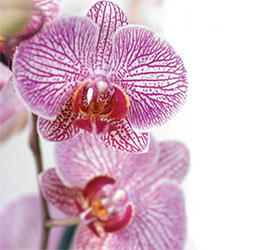 Fascination-of-Orchids