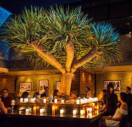 Mesa Lounge