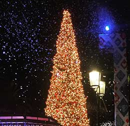 fashion-island-tree-lighting