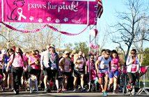 Paws-Fur-Pink-Banner