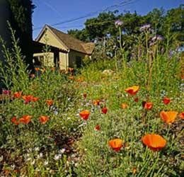Theodore Payne Native Plant Garden Tour
