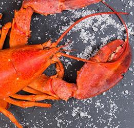 Lobsterfest-Newport-Beach