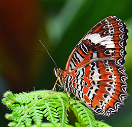 Butterfly-photo-by-David-Clode