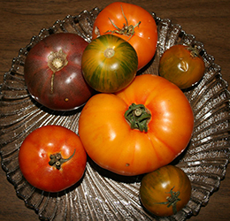 Growing-WInter-Tomatoes