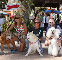 Laguna's-Pet-Parade-and-Chili-Cook-Off