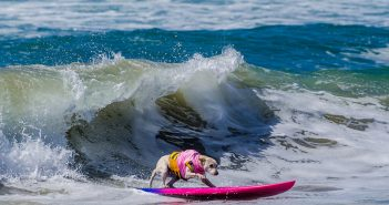 Surf-City-Surf-Dog-by-Charmaine-Gray