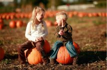 BANNER-Boots-on-the-Beach-Country-Pumpkin-Patch