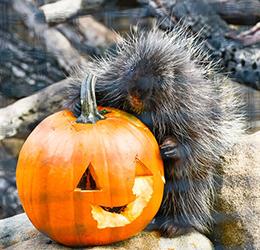 Halloween-Zoo-tacualr