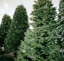 Newport-Dunes-Waterfront-Tree-Lot