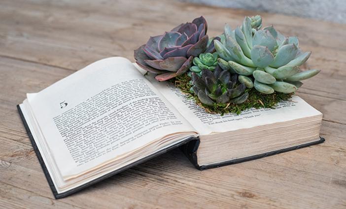 Classic-Succulent-Book-Planter-Workshop