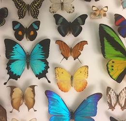 Unshelved photo by Bradley Tsalyuk / San Diego Natural History Museum