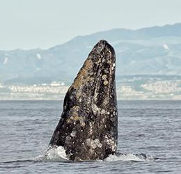47th Annual Festival of Whales photo by Chrisitina de la Fuente