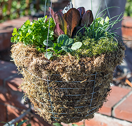 Edible-Hanging-Baskets-Designs