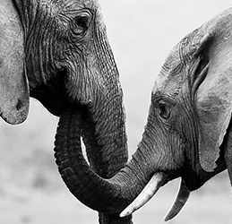 Save-the-Elephants-Benefit