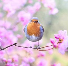 Celebrate-Spring-at-Bella-Terra