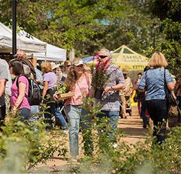 Green-Scene-and-Garden-Expo