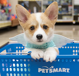 National Adoption Weekend at Petsmart