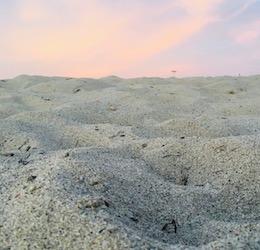 Beach Cleanup: Santa Monica photo by Christina Wiese