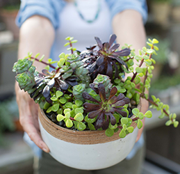 Molly Wood's Succulent Workshop photo provided by Kitchen Table Marketing + PR