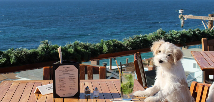 Discover These 16 Dog-Friendly Restaurants in Orange County