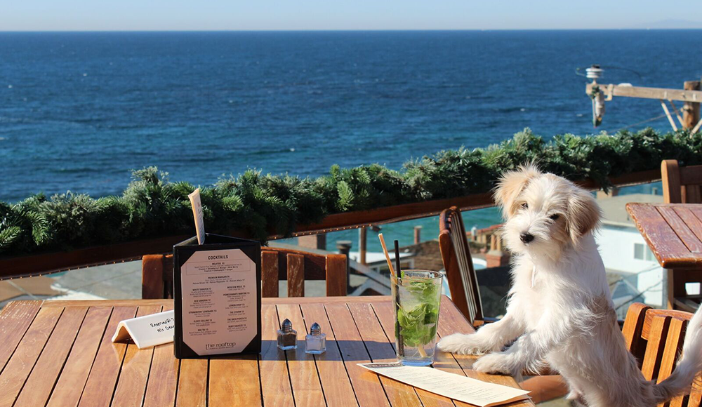 Discover These 16 Dog Friendly Restaurants In Orange County