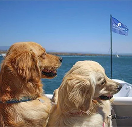 Dogs-on-Deck-Cruise-photo-by-Hornblower-Cruises-&-Events