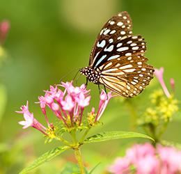 Butterfly-photo-by-Boris-Smokrovic-on-Unsplash