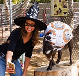 Halloween-Zoo-tacular-photo-courtesy-The-ACE-Agency