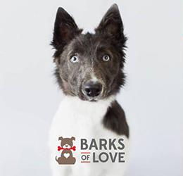 Barks-of-Love
