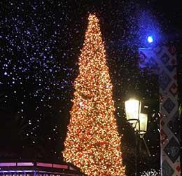 fashion-island-tree-lighting
