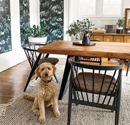 Pet-Artist-Event-at-Room-&-Board-photo-courtesy-Kitchen-Table-Marketing-+-PR
