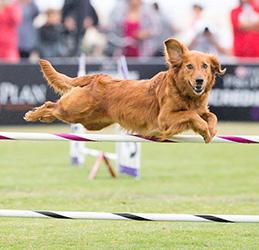 Purina-Pro-Plan-Incredible-Dog-Challenge